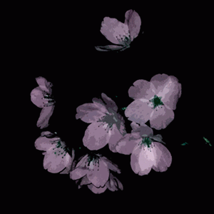 寒桜の俳句と季語