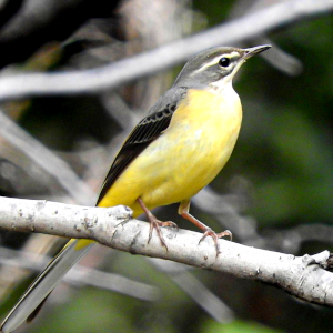 色鳥の俳句と季語