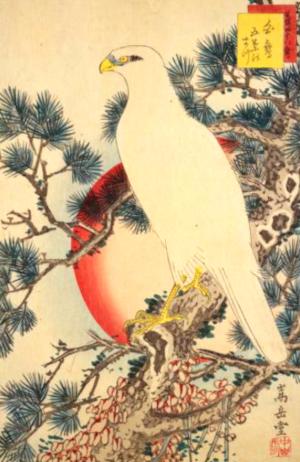 鷹の俳句と季語(生写四十八鷹白鷹五葉のまつ)