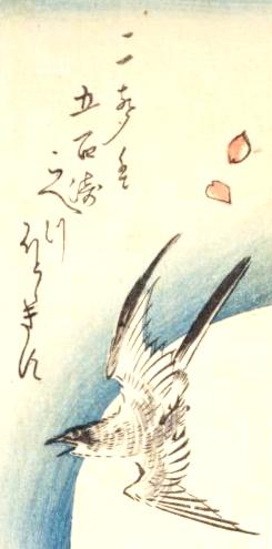 時鳥の俳句と季語(広重短冊)