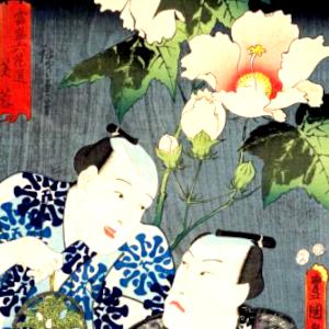 俳句と季語(当盛六花選・芙蓉)