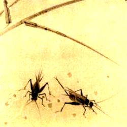 蟋蟀の俳句と季語(森白甫画)