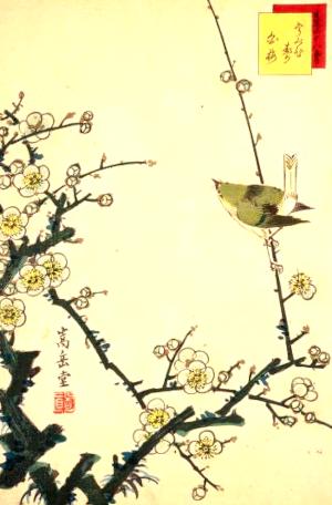 季語と俳句の鶯(生写四十八鷹うぐひす白梅)
