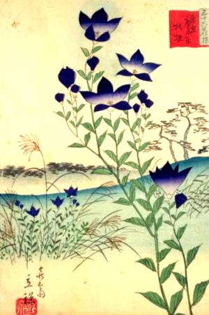 桔梗の俳句と季語(東京広尾原桔梗)
