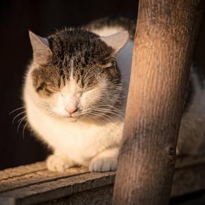猫の俳句と季語