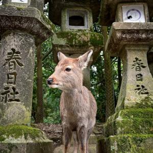 俳句動物園の俳句と季語