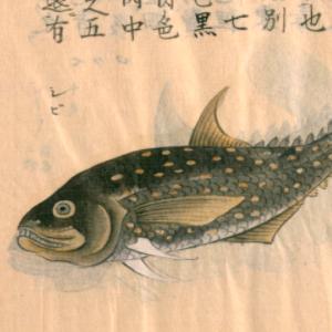 鮪の俳句と季語(日東魚譜)