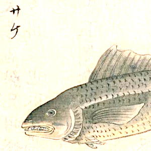 寿司ネタ俳句と季語