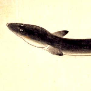 鰻の季語俳句