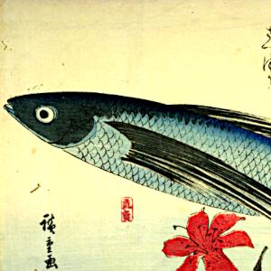 飛魚の俳句と季語